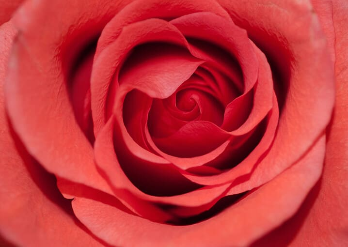 reife-haut-anti-age-konzentrat-gesichtspflege-schaebens-q10ginseng-extrakt-borretschöl-echiumöl-rose