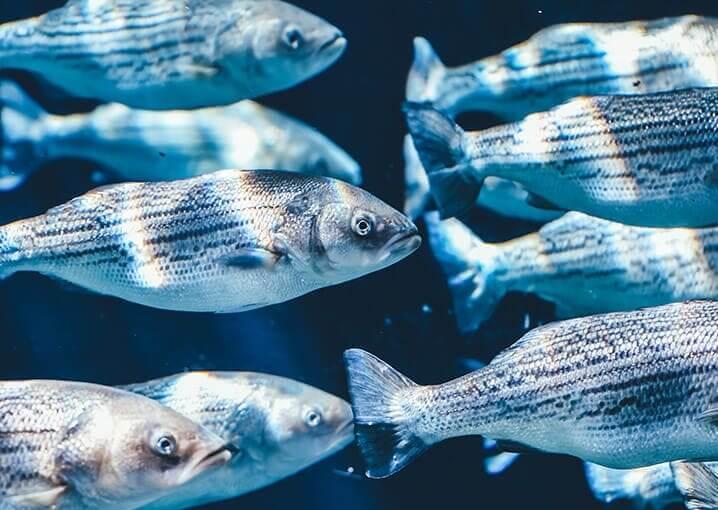 omega-3-premium-nahruhngsergaenzungsmittel-schaebens-fettsaeuren-vitamin-e-epa-dha-seefisch-lachsoel-gehirnfunktion-herzgesund-sehkraft-zellschutz-fische-meer-see