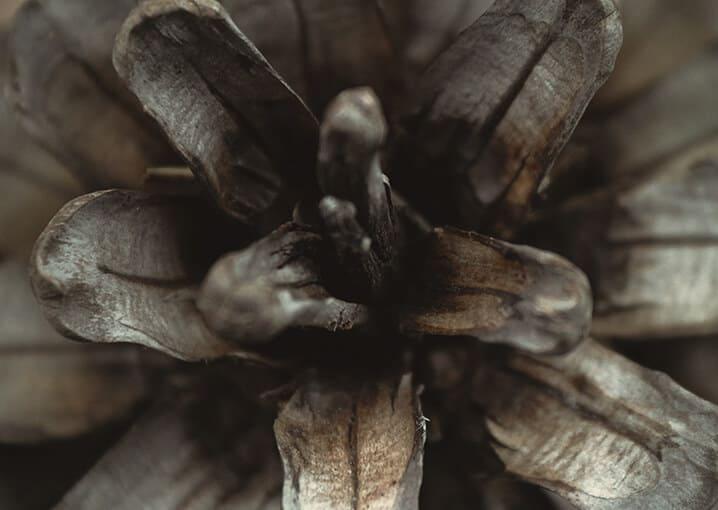 franzbranntwein-schaebens-branntwein-latschenkiefer-pflanzlich-arzneimittel-therapeutisch-unterstuetzend-kuehlend-lindernd-hautdurchblutung-vielseitig-kiefer
