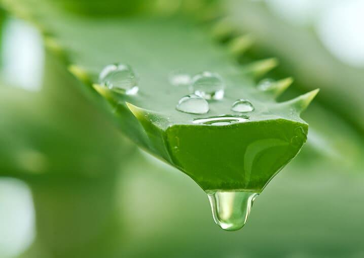 aloe-vera-trink-gel-schaebens-vitamin-c-biotin-niacin-vegan-hautelastizitaet-hautfeuchtigkeit-gruen-pflanze