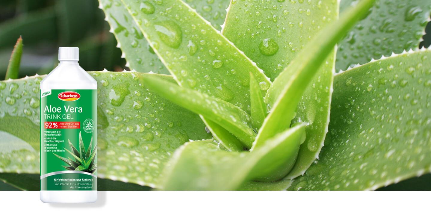 aloe-vera-trink-gel-schaebens-hautelastizität-hautfeuchtigkeit-b-vitamine-wohlbefinden-schönheit