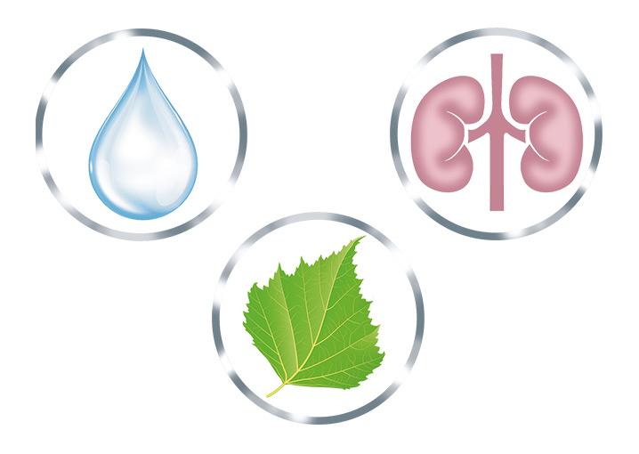 birkenblaetter-dragees-nahrungsergaenzungsmittel-doppelwirkstoff-schaebens-entwaessert-entschlackt-schonend-pflanzlich-kur