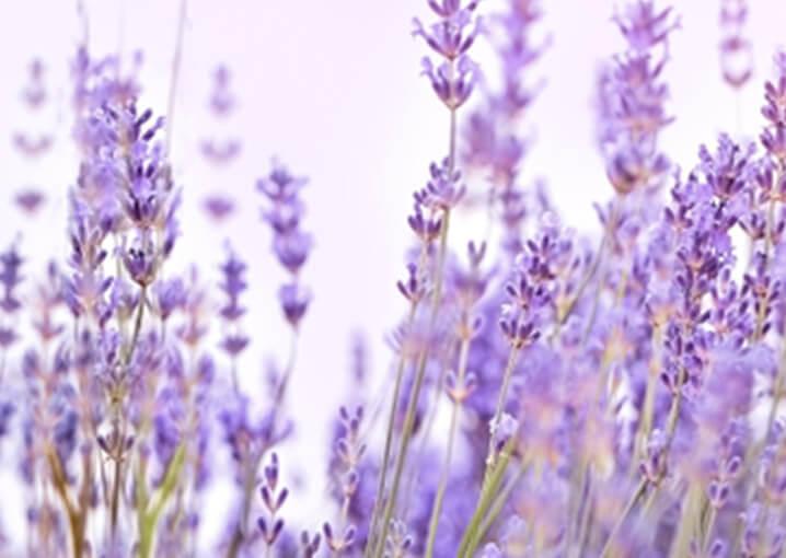 schaebens-innere-ruhe-sofort-spray-mit-lavendel